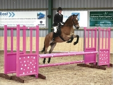 Fantastic 13. 2 Jumping Pony Club Pony All Rounder