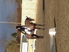 Super 6 Year Old Ex-racehorse