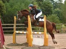 **reduced Price** 148cm Show Jumping Pony