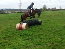 All Rounder horse - 5 yrs 3 mths 13.3 hh Bay - West Midlands