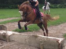 Quality Section B Mare for sale