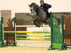 All Rounder horse - 6 yrs 0.0 hh Dapple Grey - Surrey