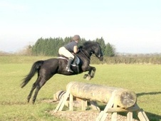 All Rounder horse - 8 yrs 11 mths 15.2 hh Black - Oxfordshire
