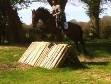 Eventers horse - 7 yrs 1 mth 15.3 hh Bay - West Sussex