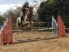148 Super Novice Jumping Mare 10 Yrs