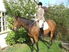 All Rounder horse - 6 yrs 1 mth 16.0 hh Bright Bay - Leicestershire