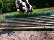 14hh Skewbald Jumping Machine