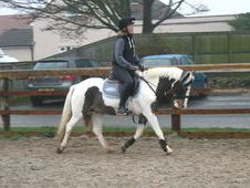 All Rounder horse - 7 yrs 14. 0 hh Coloured - West Yorkshire