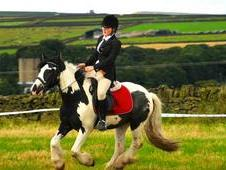 4yo ride and drive gypsy vanner coloured cob 14hh atm still growing