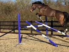 Super jumping prospect!