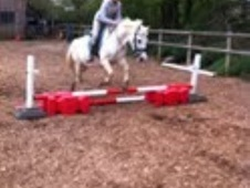 Lead Rein & First Ridden horse - 20 yrs 13.0 hh Grey - East Sussex