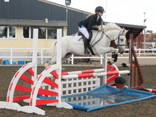 Super Talented Show Jumper/allrounder For The Family