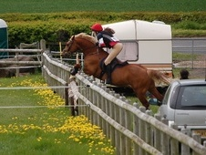 Pony Club Ponies horse - 11 yrs 11 mths 14.2 hh Chestnut - Monmou...