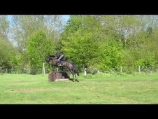 All Rounder horse - 6 yrs 6 mths 16.0 hh Black - West Sussex