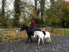 2 Beautiful Welsh mares for Loan