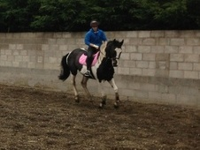 Potential young sports horses horse - 4 yrs 16.1 hh Piebald - Lan...