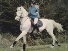 Fun All Rounder/pc Pony For Sale