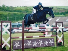 Stallions horse - 15 yrs 16.3 hh Black - Essex