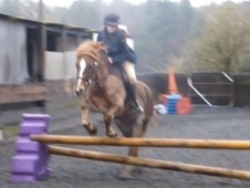 Lead Rein & First Ridden horse - 5 yrs 13.2 hh Chestnut - West Su...