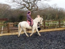 12hh Welsh Section B 11yr gelding Jumping/Competition Pony