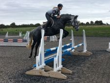 All Rounder horse - 6 yrs 16. 0 hh Dapple Grey