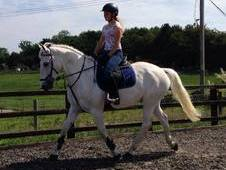 12yo Conemarra Gelding, Showjump/pc Pony.