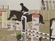 Beautiful Welsh Section D Showjumper/All Rounder Pony
