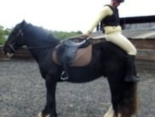 All Rounder horse - 4 yrs 14.3 hh Black - West Sussex