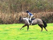 12. 2hh Hunting Pony