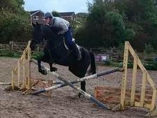 Gorgeous Warmbloodx Gelding