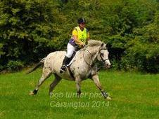 15. 3hh Appaloosa Warmblood 10 Years Old Beautifully Marked For G...