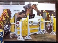 Show Jumpers horse - 6 yrs 16.0 hh Chestnut - Nottinghamshire