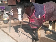 All Rounder horse - 6 yrs 15.0 hh Black - West Sussex