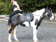 All Rounder horse - 5 yrs 15.0 hh Piebald - West Sussex