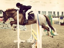 14. 2hh Event/ Dressage/ Show Jumper/ Working Hunter. Proven Comp...