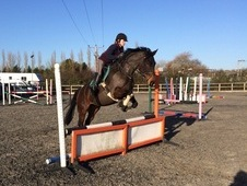 Dressage showjumping hacking
