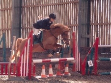 All Rounder horse - 20 yrs 12.2 hh Chestnut - Northamptonshire