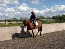 All Rounder horse - 8 yrs 16.3 hh Bay Roan - West Yorkshire