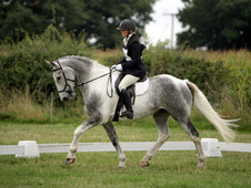 Blue & white head turner, potential eventer, xc machine