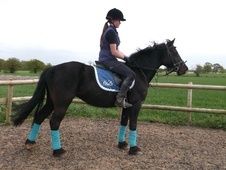 All Rounder horse - 6 yrs 14.2 hh Black - Worcestershire