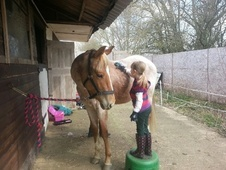 All Rounder horse - 2 yrs 6 mths 14.2 hh Chestnut Roan - Northamp...
