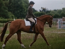 Superb Hunter Allrounder