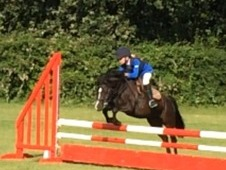 Pc/showjumping Pony For Sale