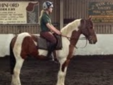 All Rounder horse - 11 yrs 15.3 hh Skewbald - County Durham