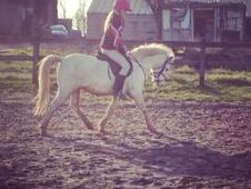Fantastic 11. 3 show pony for sale