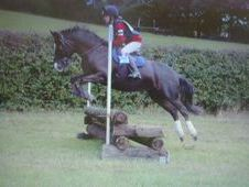 **STUNNING MARE FOR SALE**