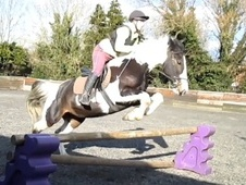 Coloured horse - 7 yrs 15.2 hh Skewbald - West Sussex