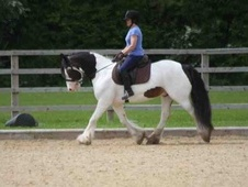 Stunning Cob For Sale