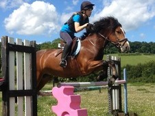 Loveable Jumping Pony