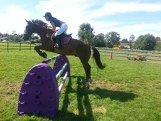 All Rounder horse - 11 yrs 1 mth 15.2 hh Liver Chestnut - West Su...